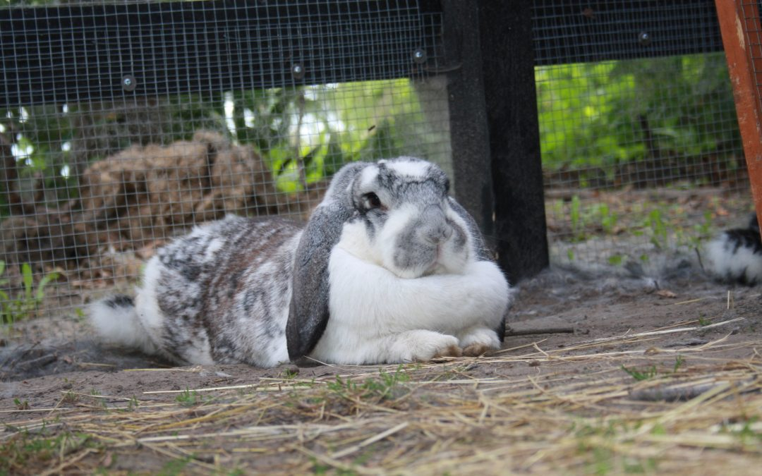 HURRA! Nu findes der et værn for kaniner!