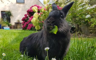 Adopter en kanin!