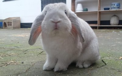 Rigtige kaniner er frikaniner!