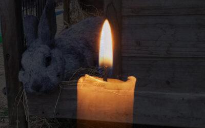 At sørge over kaniner