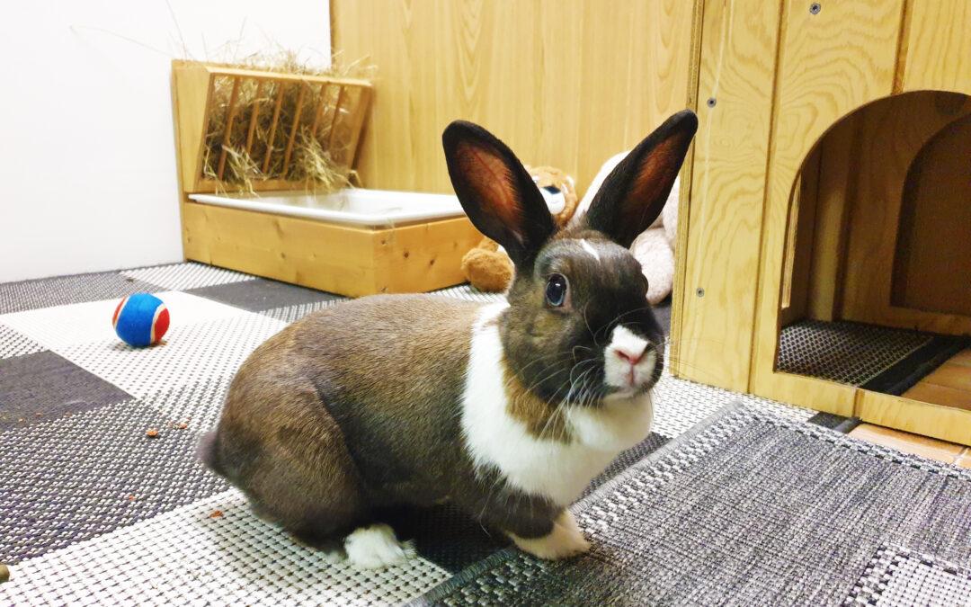 Kaninværnet siger velkommen til Nina