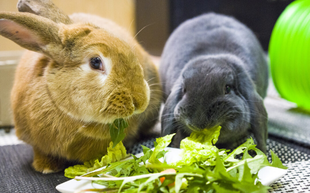 Nye kaniner hos vores Akut Team