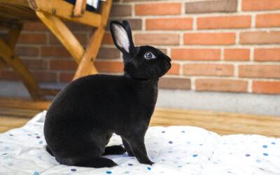 Kaninværnet siger velkommen til Ninja!
