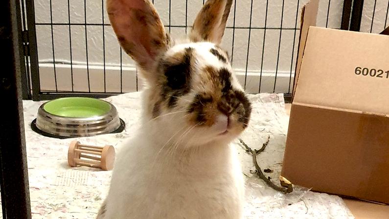 Kaninværnet siger velkommen til Cirkeline!