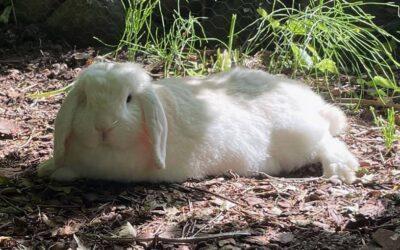 Kaninværnet siger velkommen til Kasper