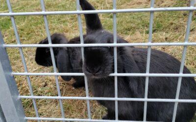 Kaninværnet siger velkommen til Bella og Boline!