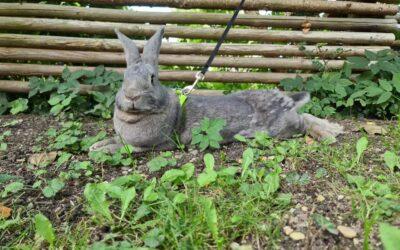 Kaninværnet siger velkommen til Bob