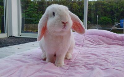 Kaninværnet siger velkommen til Storm