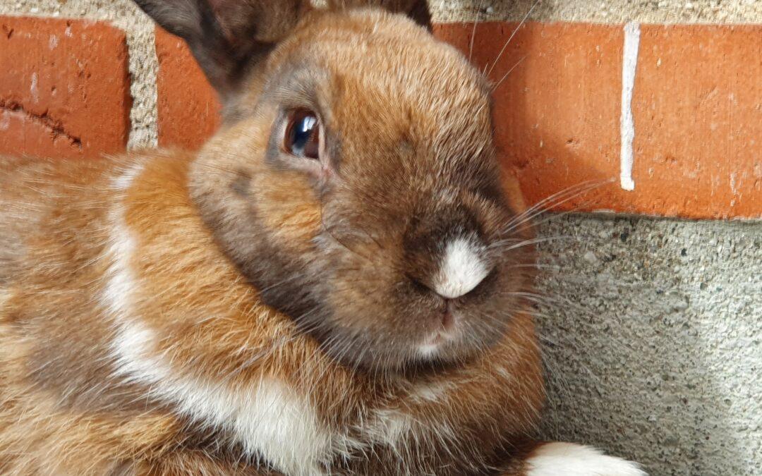 Kaninværnet siger velkommen til Rasmus