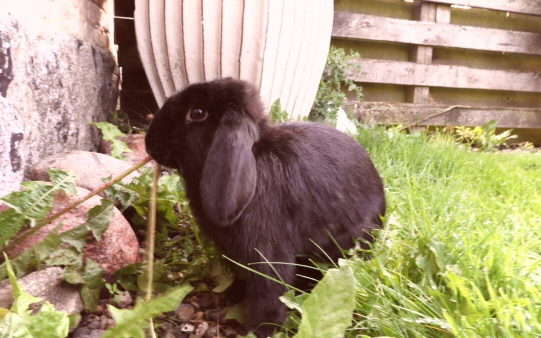 Kaninværnet siger velkommen til Bella