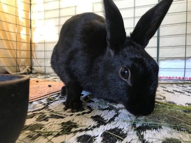 Kaninværnet siger velkommen til Harry!