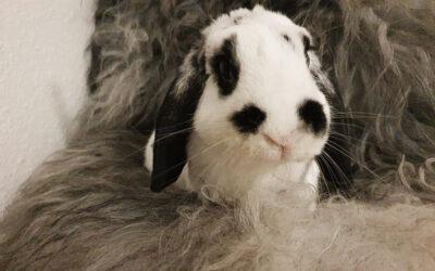 Kaninværnet siger velkommen til Musling