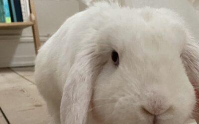 Kaninværnet siger velkommen til Almus